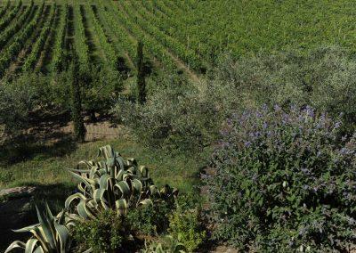 Agriturismo Monteverde -17