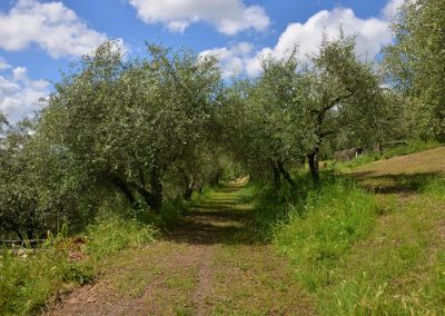 Agriturismo Monteverde -43
