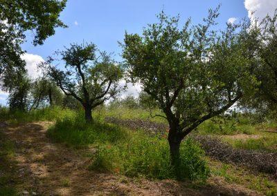 Agriturismo Monteverde -47
