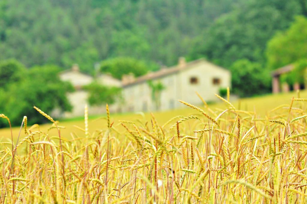 Agriturismo Il Popolano-0038